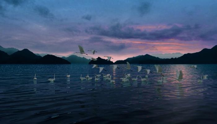 影片简介: 美丽神奇的鸟类怎么来的?回到1.5亿年前的进化过程----6500万年前恐龙灭绝鸟类大爆发----丰富多彩鸟类的分支介绍----相思鸟(鸣禽类)带入千岛湖鸟岛(保护鸟类就是保护环境) 主要角色: 蓝孔雀 蓝孔雀冠羽宽扇形。雄性蓝孔雀的体羽主要是有金属光泽的蓝绿色。蓝孔雀雌雄外观有明显区别,雌性蓝孔雀呈灰色,腹部白色,有些亚种颈部有少量绿光,但远不如雄鸟艳丽。雌鸟体大小几如雄鸟,但无尾屏,外观其貌不扬。雄性脚上有距,雌性无距。孔雀栖息于开阔低地的森林中,白天结群,夜间栖于高树上。  鸵鸟 鸵鸟是